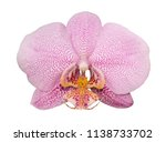 orchid isolated on white... | Shutterstock . vector #1138733702