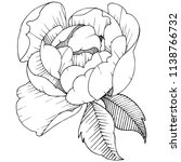 peony flower in a vector style... | Shutterstock .eps vector #1138766732