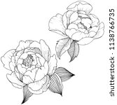 peony flower in a vector style... | Shutterstock .eps vector #1138766735