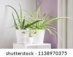 Three Plants In A Bright Sunny...