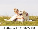 adorable girl hugging her... | Shutterstock . vector #1138997408