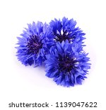 blue cornflower herb isolated... | Shutterstock . vector #1139047622