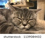 sleeping cat in cafe. | Shutterstock . vector #1139084432