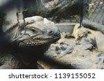 it's look like a dragon | Shutterstock . vector #1139155052
