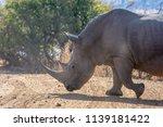 rhinos  | Shutterstock . vector #1139181422