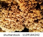 textures and patterns inside a... | Shutterstock . vector #1139184242