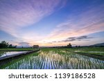green rice fild with evening sky | Shutterstock . vector #1139186528