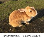cute small rabbits | Shutterstock . vector #1139188376