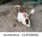 cute small rabbits | Shutterstock . vector #1139188382