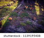 mushrooms in the underwood of...