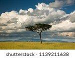 a lone umbrella acacia tree on...   Shutterstock . vector #1139211638