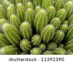cactus | Shutterstock . vector #11392390