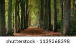 Forest Path With Big Trees In...