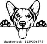 pembroke welsh corgi lap dog... | Shutterstock .eps vector #1139306975