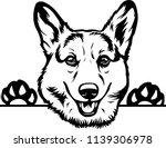 pembroke welsh corgi lap dog... | Shutterstock .eps vector #1139306978