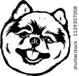 Pomeranian Lap Dog Breed Face...
