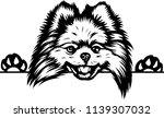 pomeranian lap dog breed face... | Shutterstock .eps vector #1139307032