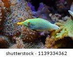 Tropical Fish In The Aquarium...