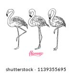 set of cute flamingos. hand... | Shutterstock .eps vector #1139355695