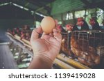 Eggs Chickens  Hens In Cages...
