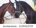 two horses nuzzled | Shutterstock . vector #1139423735