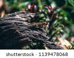 colorful golden and green... | Shutterstock . vector #1139478068