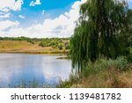 weeping willow tree or babylon...   Shutterstock . vector #1139481782