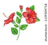 bright blooming hibiscus ... | Shutterstock . vector #1139509718