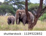 an elephant herd grazing in... | Shutterstock . vector #1139522852
