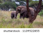 an elephant herd grazing in... | Shutterstock . vector #1139522855