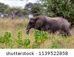 an elephant herd grazing in... | Shutterstock . vector #1139522858