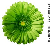 Gerbera Green  Flower  On Whit...