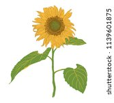 isolated blooming sunflower... | Shutterstock .eps vector #1139601875