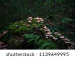 Dark Magic Forest. Group Of...