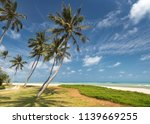 coconut trees at the beach | Shutterstock . vector #1139669255