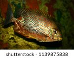 Orange Spotted Exotic Fish