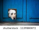 head of labrador dog sticking... | Shutterstock . vector #1139880872