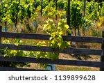 vineyard in sweden a sunny... | Shutterstock . vector #1139899628