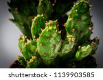 Macro Photography Of Cactus