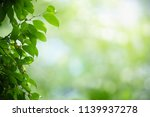 closeup nature view of green... | Shutterstock . vector #1139937278