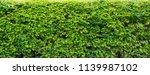 green leaves natural background ... | Shutterstock . vector #1139987102