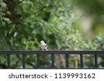 chickadee titmouse songbird... | Shutterstock . vector #1139993162
