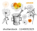 calendula flowers.vector set ... | Shutterstock .eps vector #1140052325
