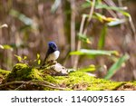 cyanomelana of tsudokado | Shutterstock . vector #1140095165
