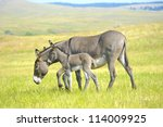 A Mother And Baby Burro...