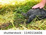 small turtle in grass outdoor.... | Shutterstock . vector #1140116606