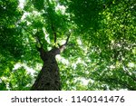 forest trees. nature green wood ... | Shutterstock . vector #1140141476