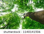 forest trees. nature green wood ... | Shutterstock . vector #1140141506