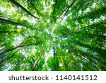 forest trees. nature green wood ... | Shutterstock . vector #1140141512