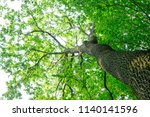 forest trees. nature green wood ... | Shutterstock . vector #1140141596